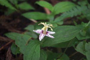 近くに咲いていた花-4