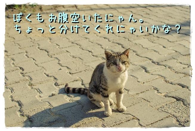 20131120_2.jpg