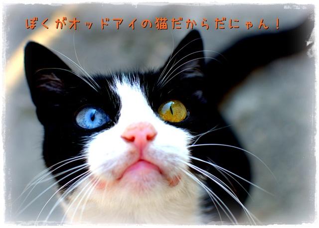 TAI_7202_20131120235053bcd.jpg