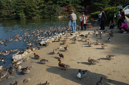 DSC_0005峠赤松池