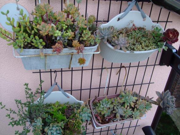 多肉植物寄せ植え~2階のベランダ軒下で夏越しました♪2013.08.31
