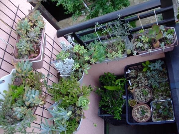 多肉植物寄せ植え~軒下で夏越しました~♪2013.08.31