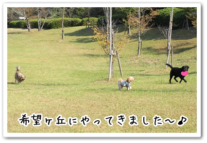 2013101922464654d.jpg