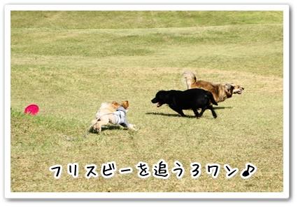201310192246477a3.jpg