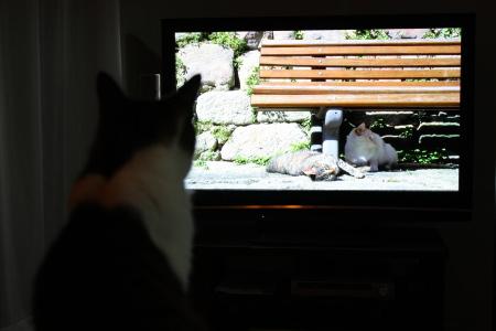 ネコが来て