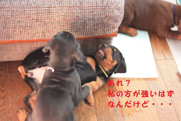 07_201311162009476bd.jpg